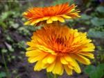 Esa Flor